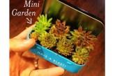 01-ideias-de-lugares-inusitados-para-cultivar-suculentas