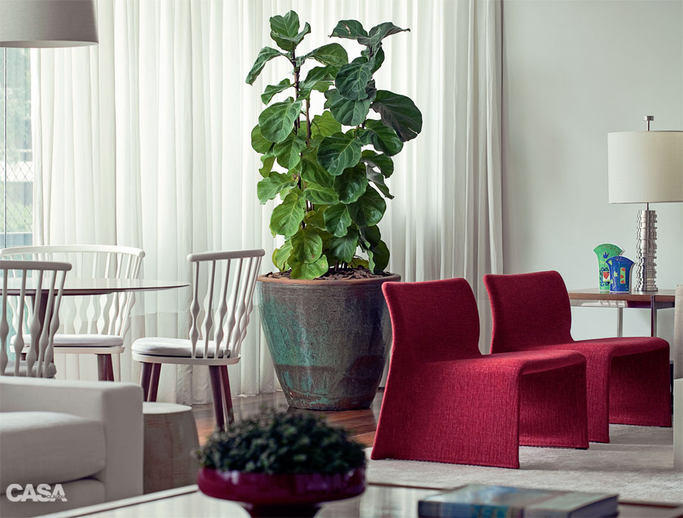 01-plantas-que-se-desenvolvem-bem-em-areas-cobertas