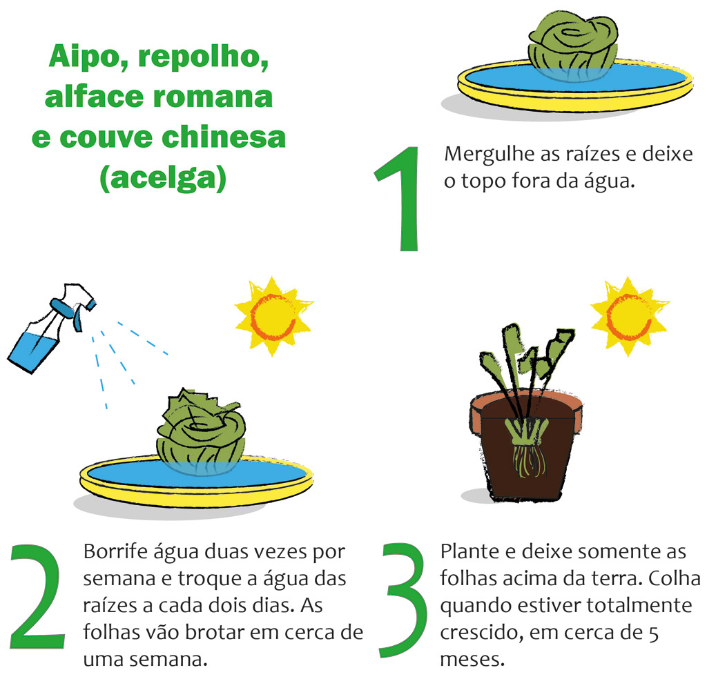 02-horta-em-casa-7-tipos-de-plantas-que-voce-pode-cultivar-tranquilamente