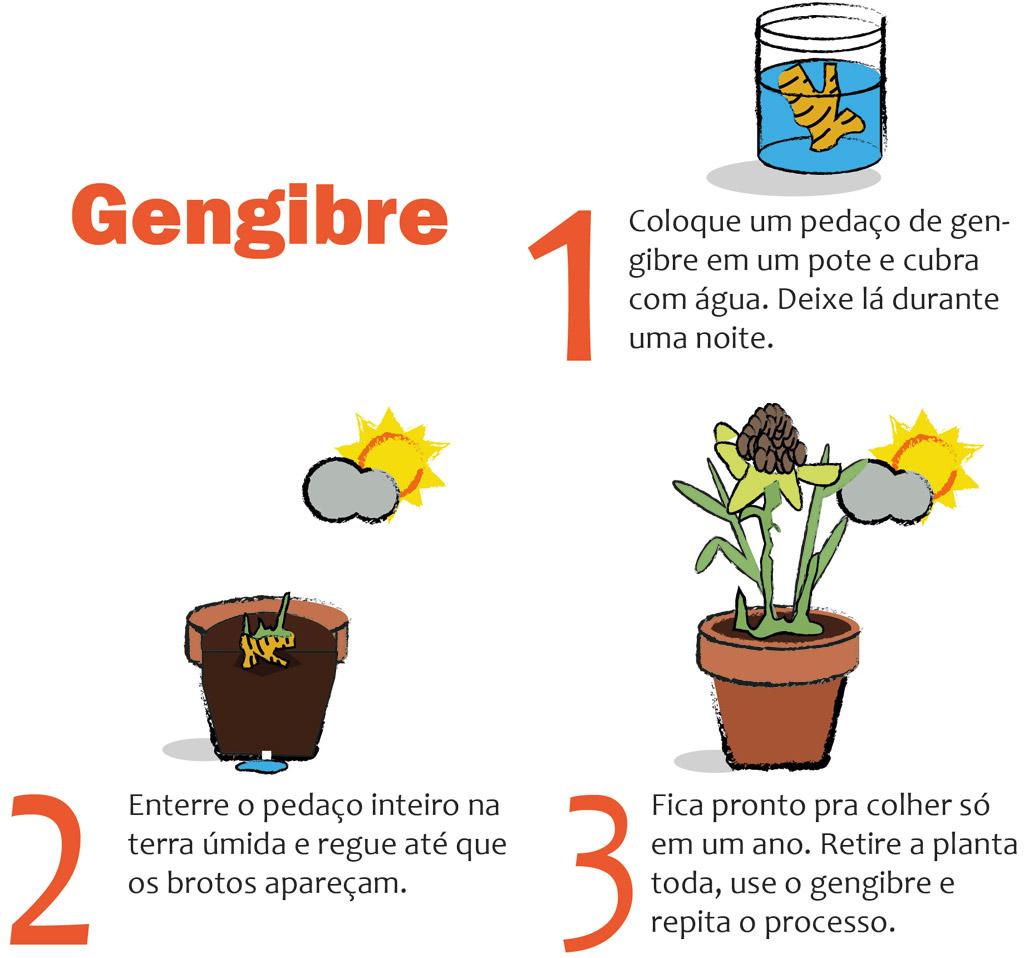 03-horta-em-casa-7-tipos-de-plantas-que-voce-pode-cultivar-tranquilamente
