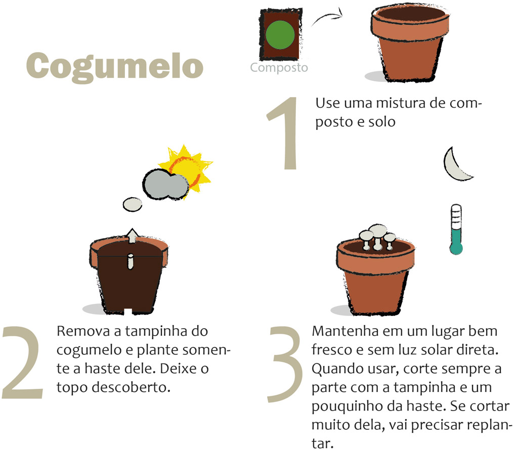 06-horta-em-casa-7-tipos-de-plantas-que-voce-pode-cultivar-tranquilamente