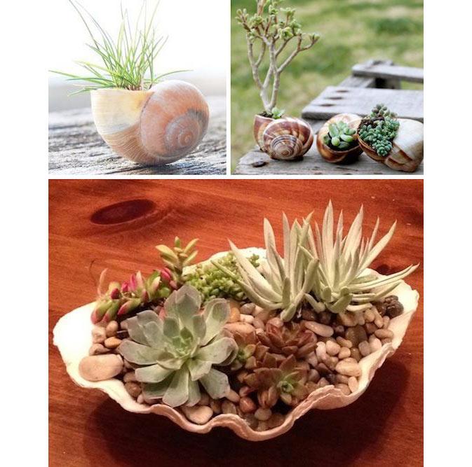 06-ideias-de-lugares-inusitados-para-cultivar-suculentas