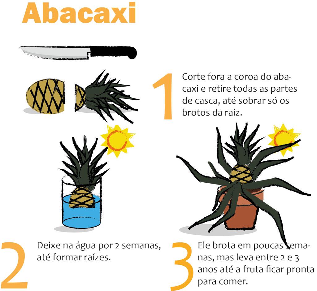 08-horta-em-casa-7-tipos-de-plantas-que-voce-pode-cultivar-tranquilamente