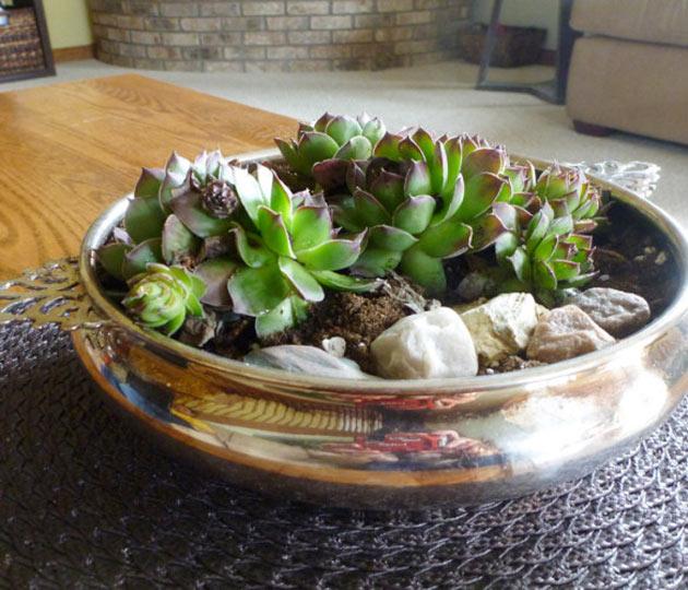 10-ideias-de-lugares-inusitados-para-cultivar-suculentas