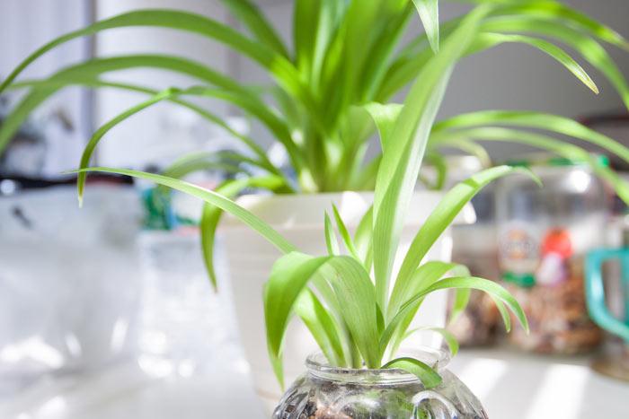 10-plantas-que-ficam-bem-em-uma-mesa-de-centro