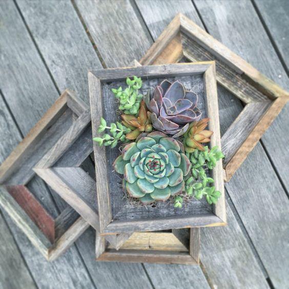 12-ideias-para-fazer-quadros-suculentas-em-casa