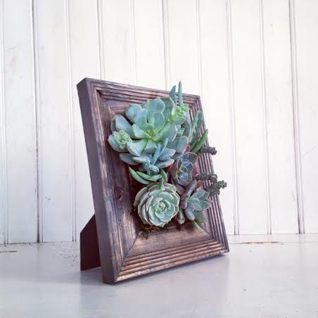 22-ideias-para-fazer-quadros-suculentas-em-casa