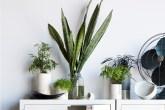 plantas-com-livros