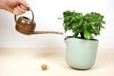 01-com-este-vaso-voce-so-precisa-regar-as-plantas-uma-vez-por-mes