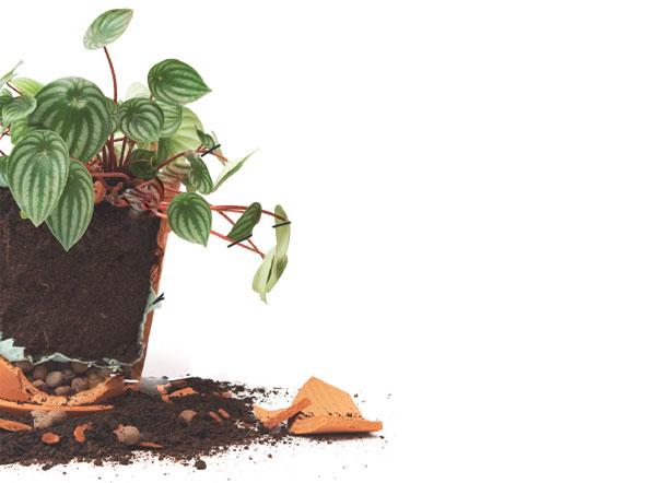 07-plantas-que-se-desenvolvem-bem-em-areas-cobertas