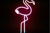 1-objetos-de-neon-ganham-destaque-na-decoração