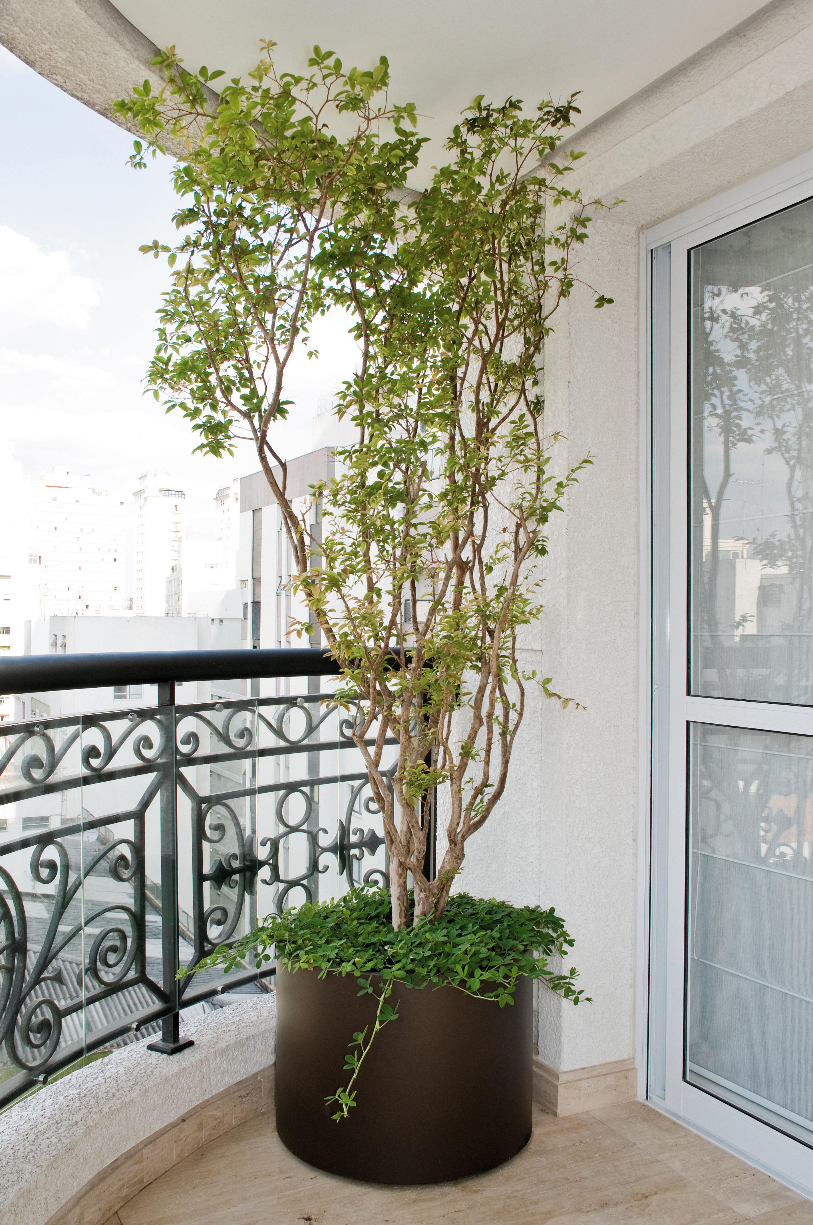 2-árvores-frutíferas-varanda