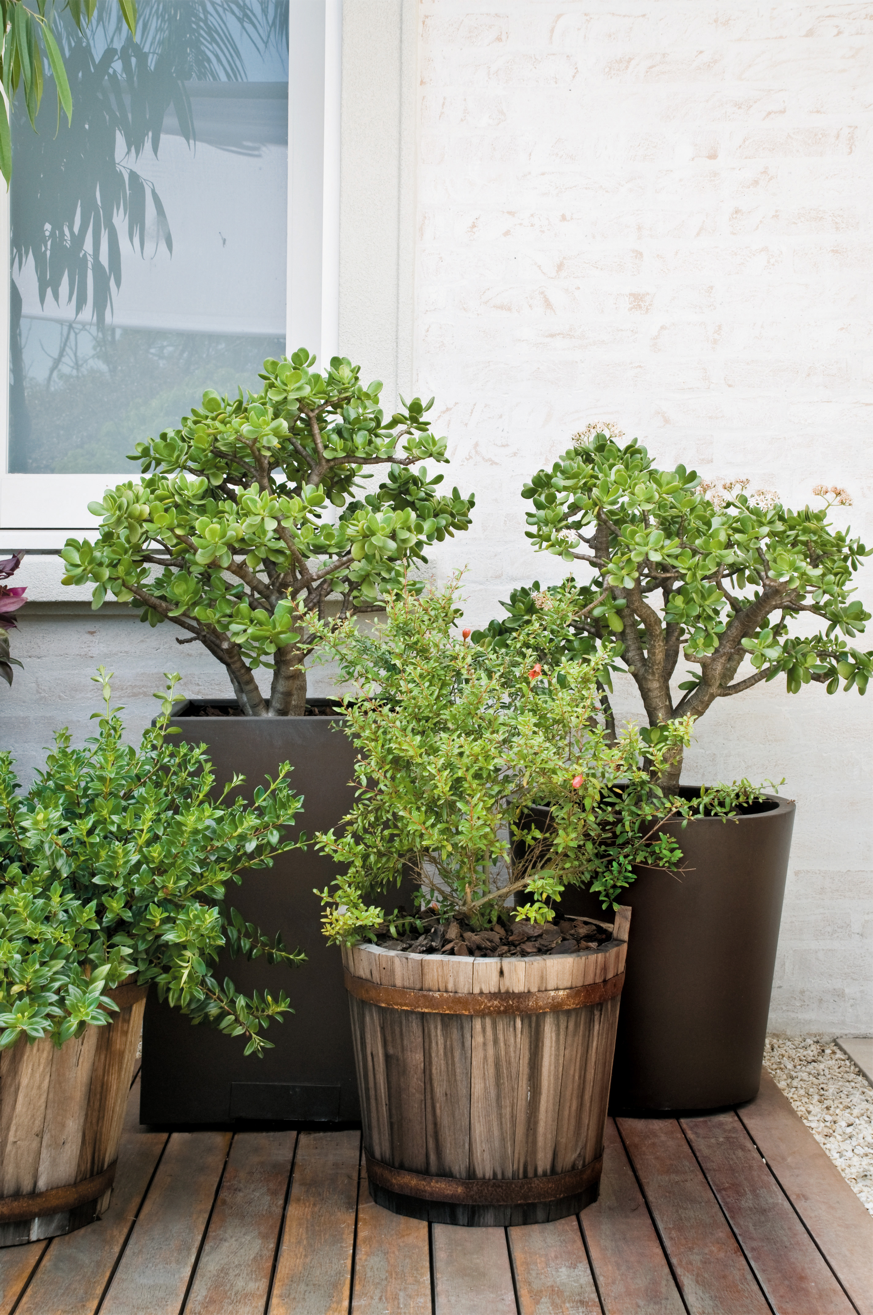 3-árvores-frutíferas-varanda