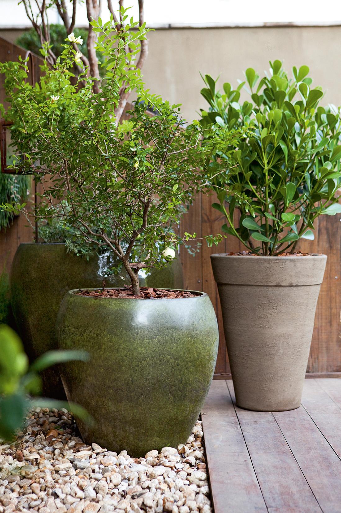 4-árvores-frutíferas-varanda