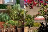 Jardim com pé de limão-siciliano e vasos com rosas