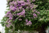 destaque-plantas-que-fazem-bonito-na-entrada-de-casa-e-na-calcada