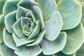 f2_plantas-de-apartamento-saiba-quais-especies-cultivar