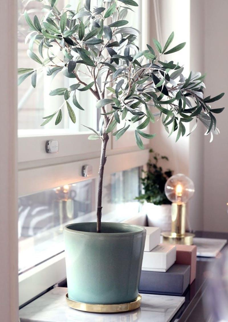 2-oliveiras-em-casa