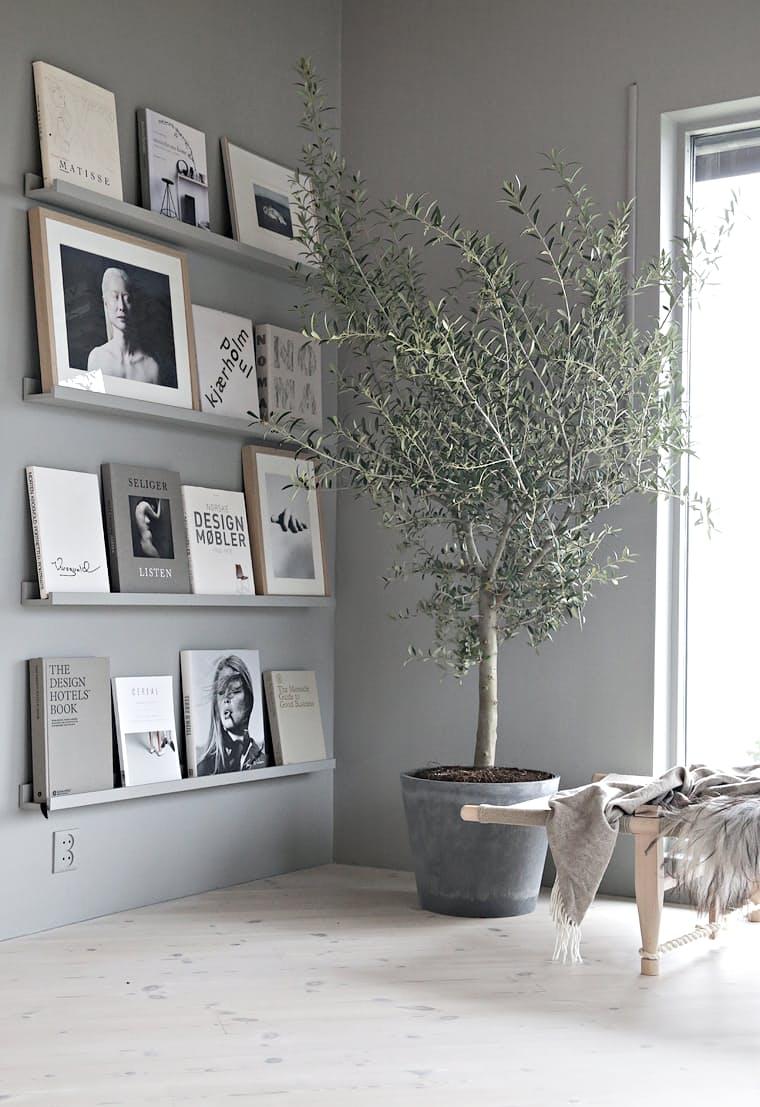 3-oliveiras-em-casa