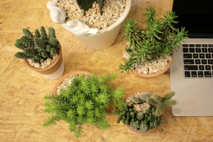 card-cactus-site