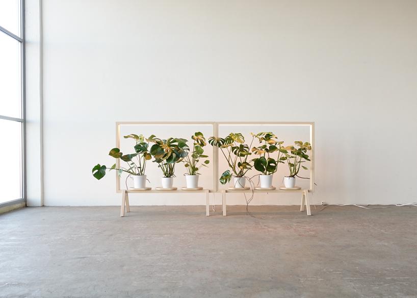 kauppi-divisoria-ilumina-plantas