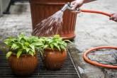 Plantas sendo lavadas