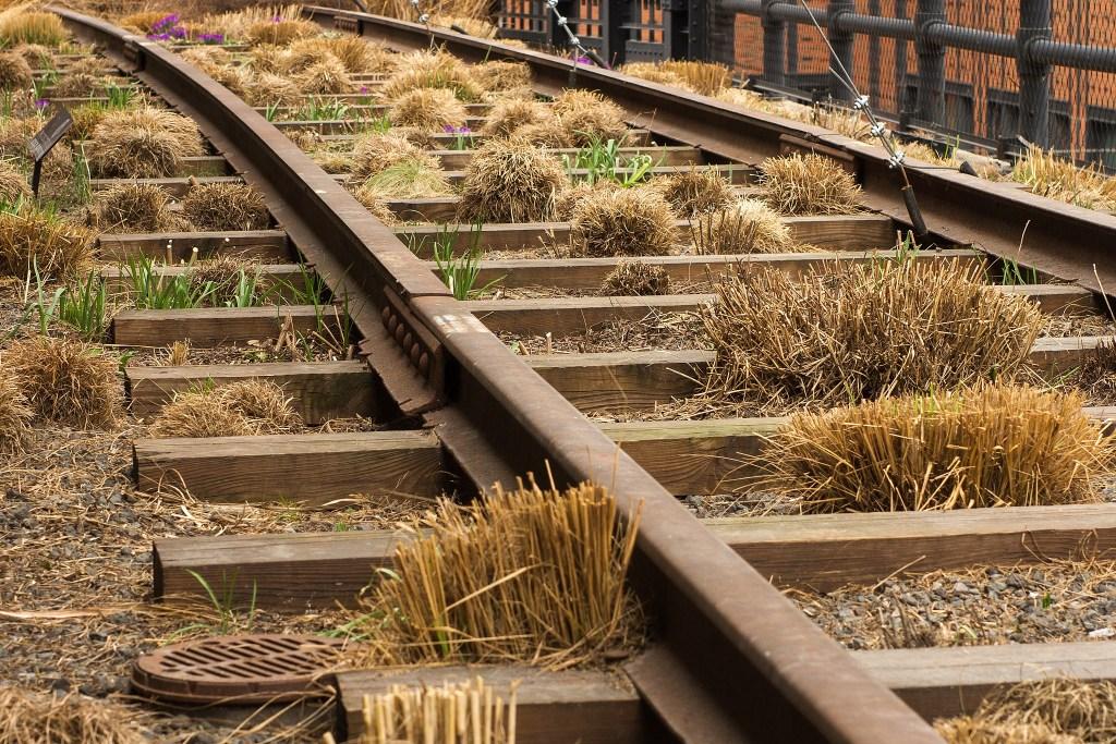 O parque, em Nova York, fica em um trilho de trem desativado e revolucionou o espaço público na cidade, se tornando um modelo mundial