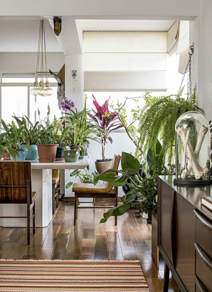 Perto da janela, fica o limoeiro. Na mesa, diversas espécies de orquídea, como vanda, phalaenopsis e cymbidium. A samambaia e o pacová completam a coleção. Luminária feita pela designer.