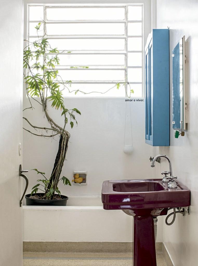 O filodendro cresce num vaso na banheira.