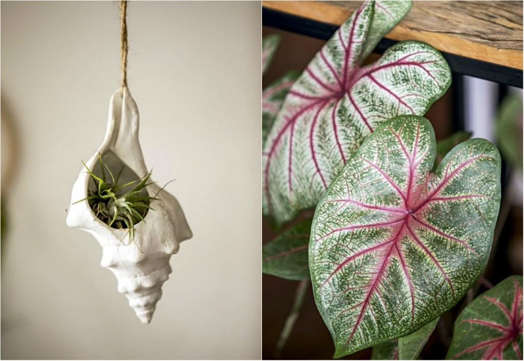 À esquerda, a air plant tillandsia ficou charmosa no vaso em forma de concha. À direita, detalhe da caladium.