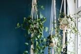 Cantinho com plantas em hangers e uma jiboia