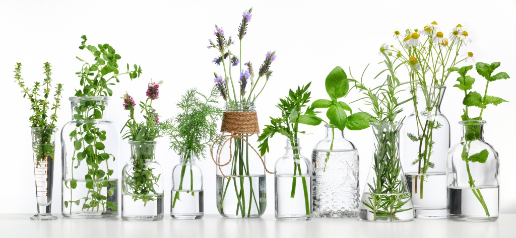 Plantas nos vidros